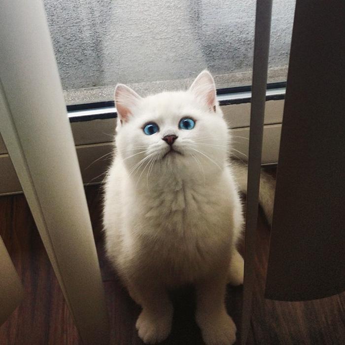 En Güzel Gözlü Kedi
