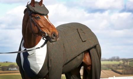 Dünyanın En Yakışıklı Atı